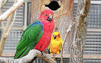 Ausflug in den Vogelpark Walsrode